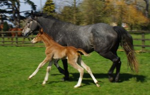 Dizzy with her 2016 Persiflage filly.
